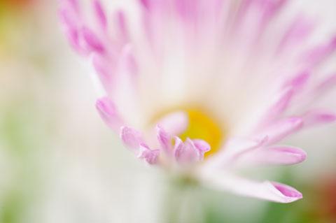 冒頭写真のお花。でも心ここにあらず,魂のこもっていない写真である。