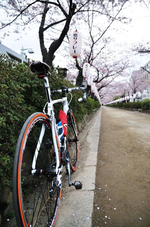 段葛は自転車走行禁止なので押し歩き。まぁ,ロードでは走れないでしょうけど・・・。