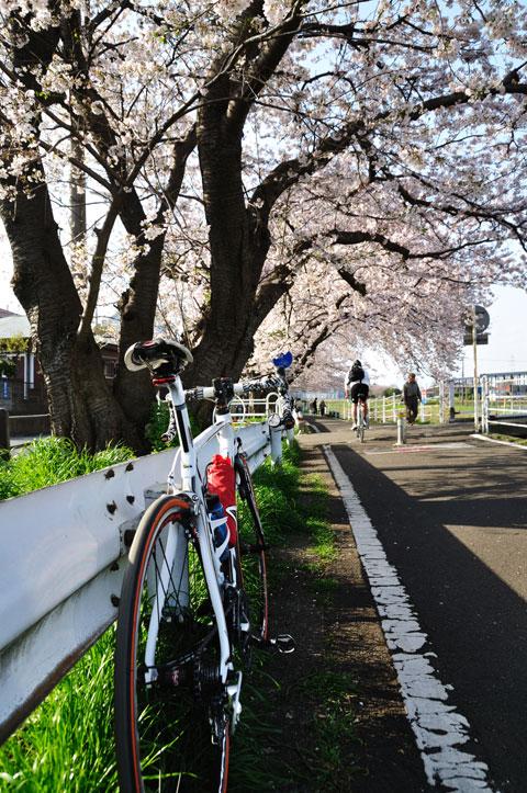 自転車の方もたくさん走っていました。お気を付けて~
