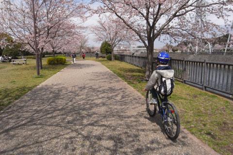 コレは河口に向かって右岸。左岸も同じ感じで桜並木になっています。