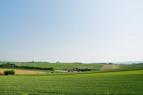 富良野の「パッチワークの丘」です。ええとこだなぁ・・・。