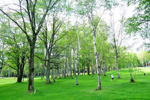 林に打ち込み,コースに戻ろうとするカズボン。白樺林がきれいです。