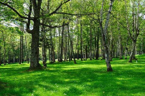 2日目の午前中は一時的に快晴になりました。これは,家族でパークゴルフに行ったときの林。
