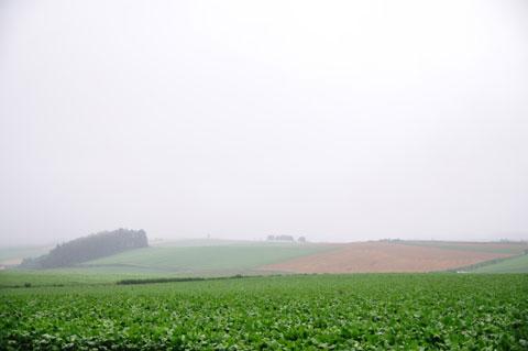 結構激しく降る雨で霞む,美瑛の丘。