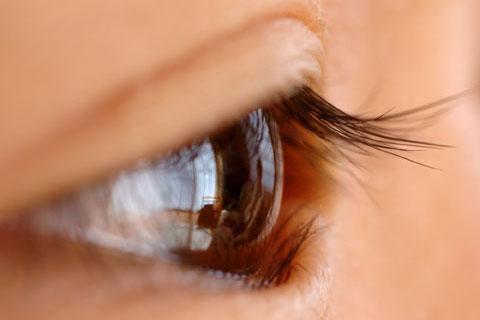 カズボンの目玉。ここでキャッチした映像が脳で認識できるまで約0.3~0.5秒。
