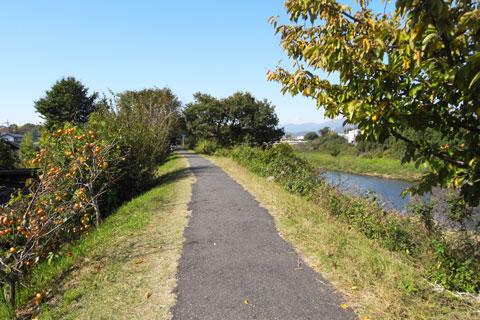 自走したおかげで,こんなのどかな道(金目川CR)を走れたからウレシイ(^^)