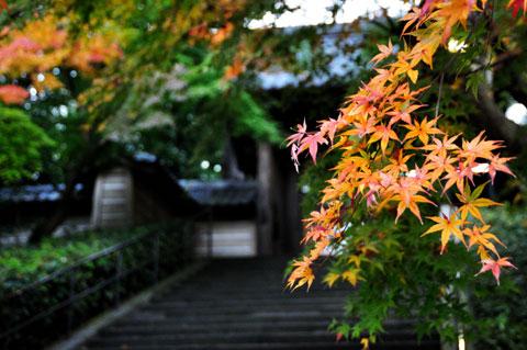 円覚寺。過去の経験では,入り口付近はきれいですが,境内はそんなではなかったような・・・。