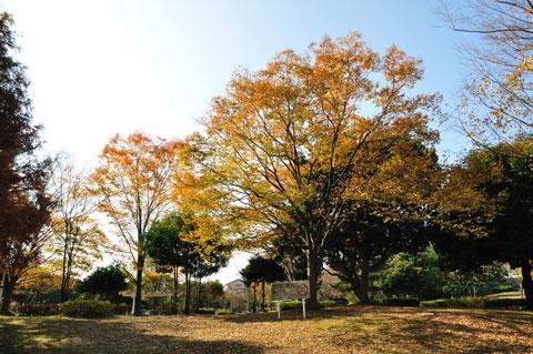 鎌倉より,普通の公園のほうがきれいな紅葉に出会えました(^^)