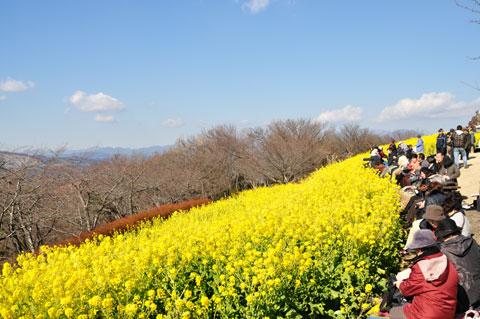 菜の花&富士山&ヤビツ峠。シアワセな場所です(^^) 【フォトアルバムはこちら!】