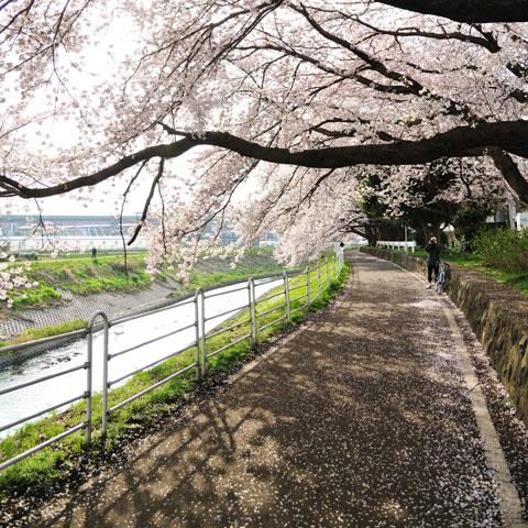 そういえば,4月上旬はこんな感じだったんでした。春はいいですな~(^^)