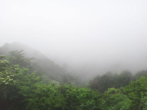 でも,霧に包まれる深山風の景色が楽しめたので許す(^^)