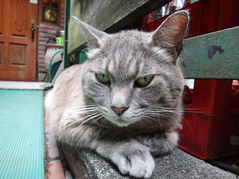 こちらの猫さんはさらに厳しい目線。「おまえ,練習が足りないんじゃねえか。食べてる場合か?」と言っているのかも。