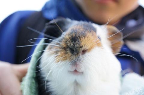 可動式LCDのおかげで,大好きな動物の「鼻写真」が撮れます(^^)