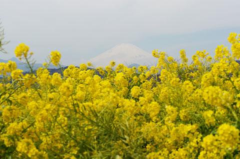 もちろん,富士山です(^^) 6月にはいくぞ~!