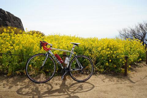 自転車は担いで持ってきてもダメとのことなので,来年は撮れない写真です。