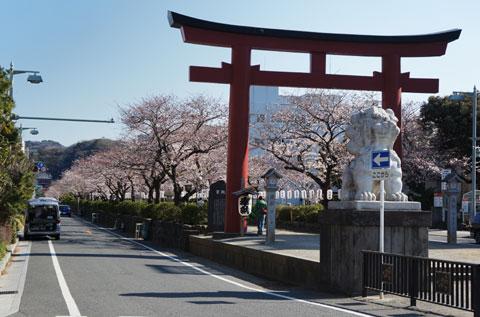 おぉ~,毎年の見事な桜風景です(^^) 今週末あたりが見ごろかな?