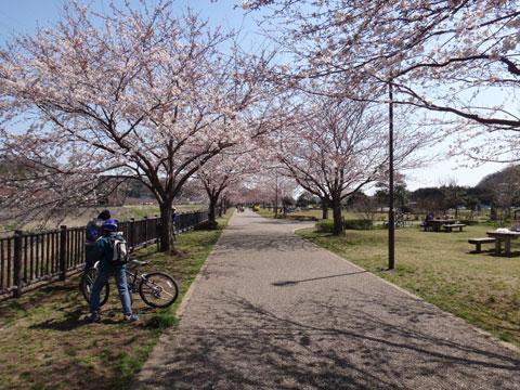 ここの桜はとても若く,小さい。お子様連れにピッタリです(^^)