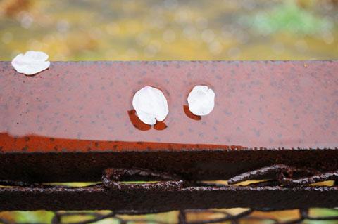 雨で寒い日も,カメラさえあれば小さな発見に出会える(^^)