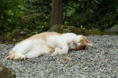 浄明寺のマスコット(?),ネコのももちゃんに出会えました。ふにゃ~