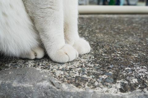 フォトポタ日記ではあまり見かけない,猫の手の写真(^^)
