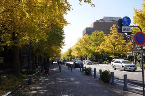 山下公園付近。もう,どこまでいっても,真っ黄色(^^)