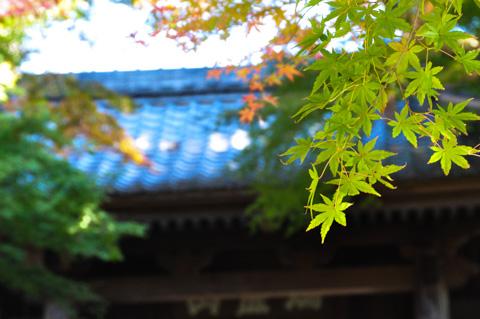 円覚寺の山門。おいらの望遠(といっても120mm)ではこれが限界。