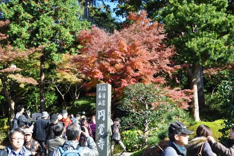 北鎌倉の円覚寺に到着。なにこの人の量・・・?