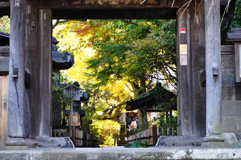 小さな山門から,箱庭のような紅葉を見ることができます。