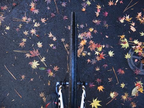海蔵寺の参道は落ち葉が一杯でした。今週末まで持ってくれるかな・・・?