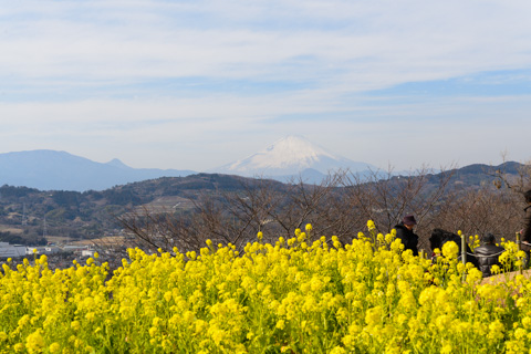 富士山&菜の花。もっと絞りを絞らないと・・・。