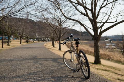 小ぶりな桜並木がず~っと続きます。早く咲かないかな~(^^)