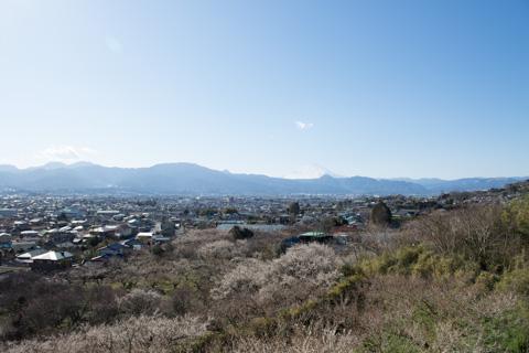 おぉ~,梅林&富士山が一望だ!