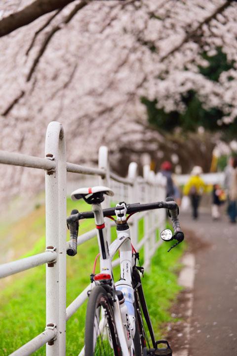 出かけた先で桜ばかり眺めていたので,あまりトレーニングにはなっていない・・・。