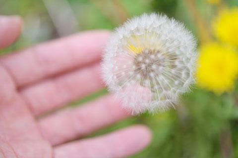 この手のひらに,数百個の花が乗っています。ひぇ~