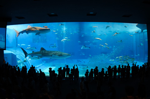 美ら海水族館。晴れているけど屋内だから意味無し・・・。