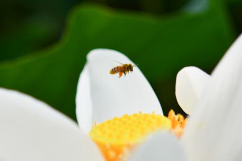 飛行中の蜂を射止める(^^)
