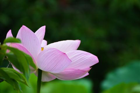 数10m先の花です。手持ちレンズが重い・・・。