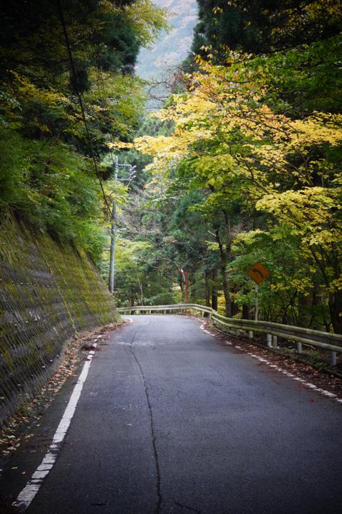 こんな道を,ゆっくり,ゆっくり上っていきます(^^)