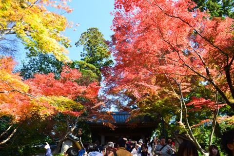 円覚寺。綺麗なんだけど,人が多過ぎて歩けない・・・。