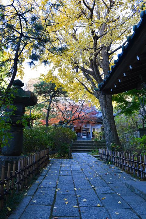 静かな紅葉名所,安国論寺。おいらが大好きなお寺です(^^)