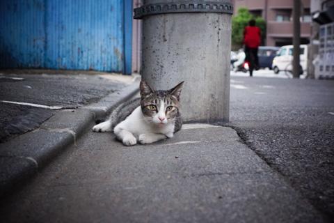 猫を撮るには最高に便利な,可動式液晶モニター。