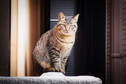 カメラが小さいから,ネコさんも逃げないのかな?