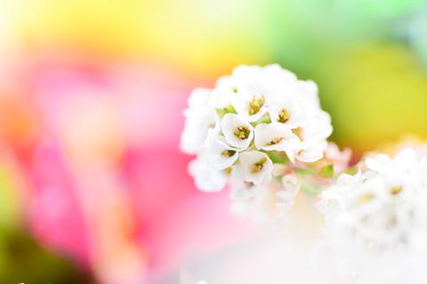 春っぽく(^^)