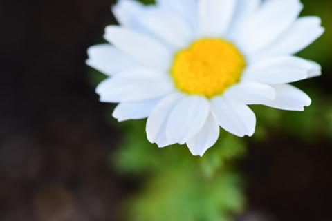 庭の花も咲き始めました(^^)