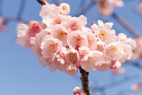 こんもりと咲いています(^^)