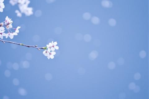 あんまり綺麗じゃない目黒川だけど,ホワイトバランスで青空っぽく。