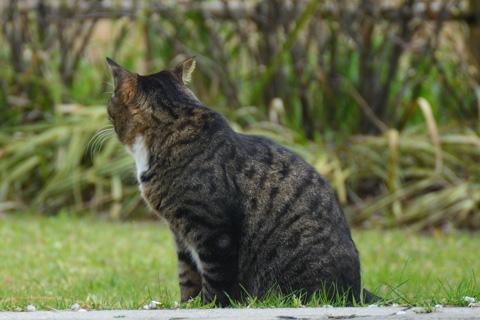 かわいいネコさん。お願い,こっちを向いて~!