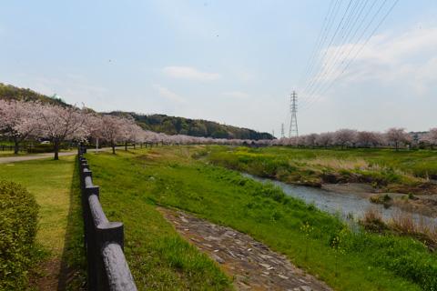 引地川サイクリングロード。ちと見ごろが過ぎてるけど,のどかでいい感じ。