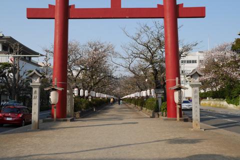 4月9日の鎌倉。もう,サクラの季節は終わっていました(涙)