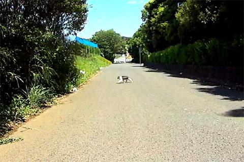 スタート直後にネコと遭遇。にゃんにゃん落車しないように!